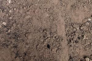 Premium Top Soil